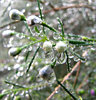 winter raindrops