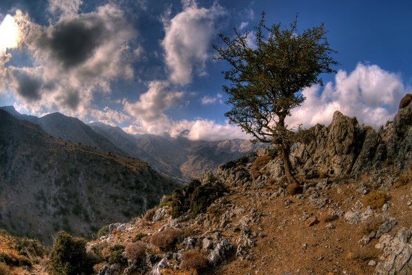 Mountain top - HDR: Small tree on the top of a mountain. The picture is from Crete, Greece. The picture is HDR.