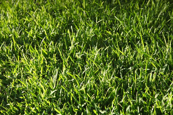 Grass: no description