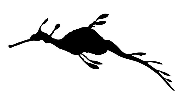 silhouette leafy sea dragon: a rare marine species; 