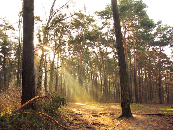 sunbeams in the forest: sunbeams in the forest