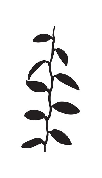 leaves: Adobe Illustrator CS5