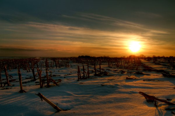Stubble field - HDR: A stubble field in snow and the light from a sunset. The picture is HDR.