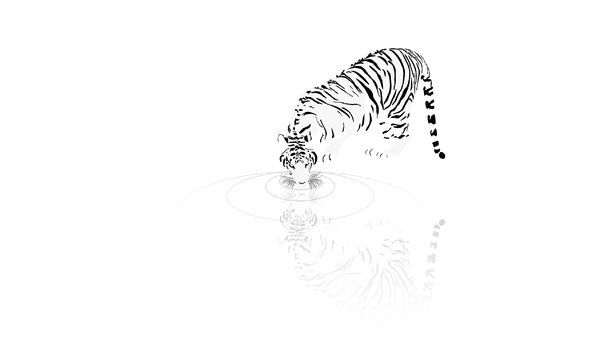 wallpaper drinking tiger: no description