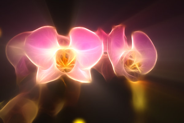 Orchid headlights: What if you could have a set of headlights made out of orchids ?