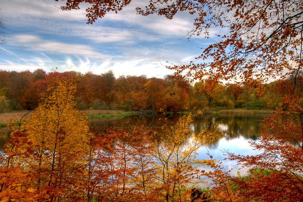 Forest lake - HDR: Forest lake with trees around in autumn colors. The picture is HDR.