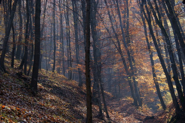 Autumn Forest: As seen on a walk in the Danube Bend