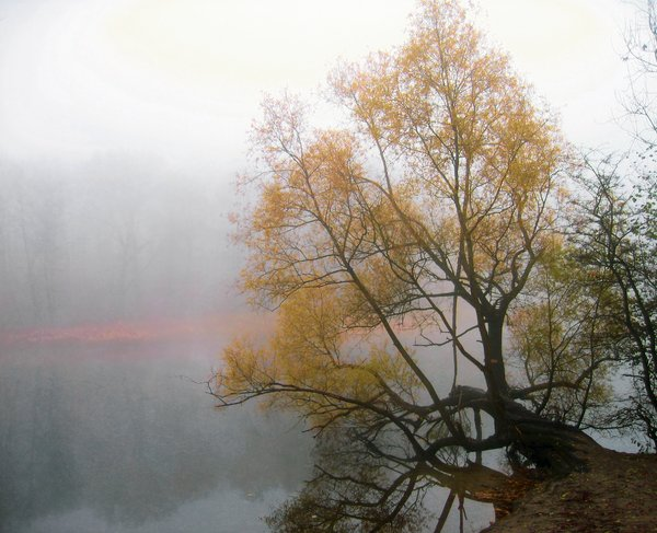 foggy willow at the lakeshore: foggy willow at the lakeshore