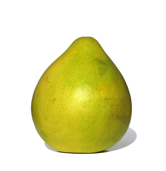 the biggest citrus