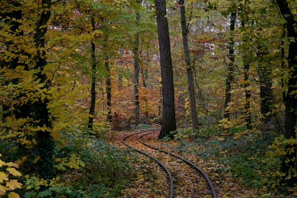 tracks in autumn: railway tracks in autumn in Karlsruhe/Germany, in the park of the castle
