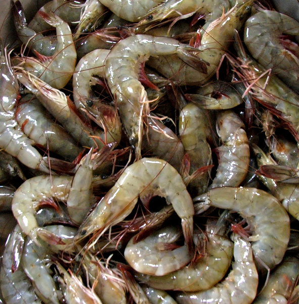 cold prawns: uncooked fresh prawns on ice at fish market