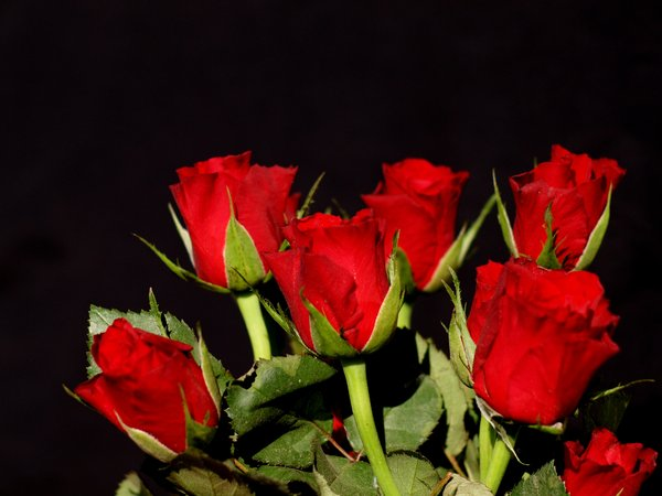 A bouquet of red roses: A bouquet of red roses on a black background