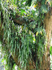 high-up tree ferns