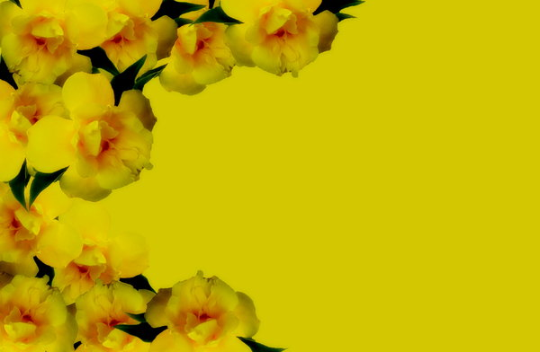 Floral Border New 2: A floral border in warm yellows, suitable for a gift card or note to your Mum for Mother's day. Also suitable for get well messages, birthdays, or any special message for a loved one.