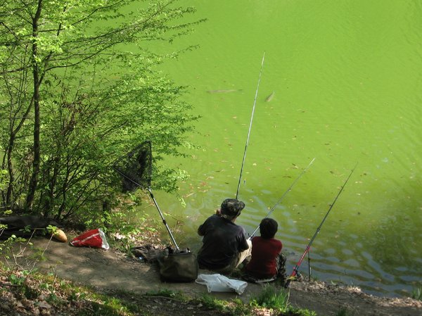 fishing in the pond: none
