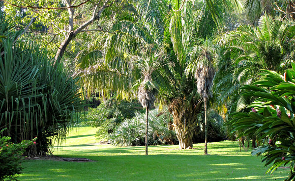 palm tree park: park with a variety of palm species