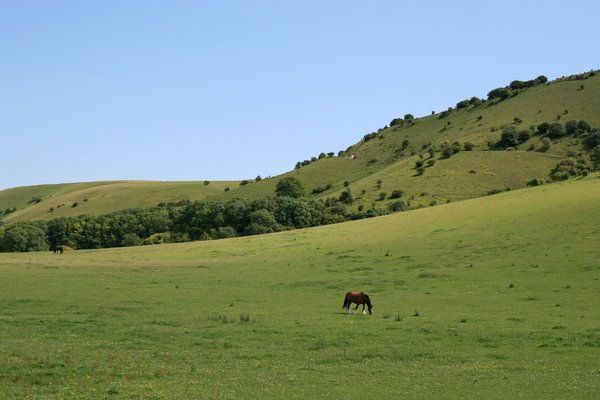 South Downs Meadows: Meadows on the South Downs, West Sussex, England.