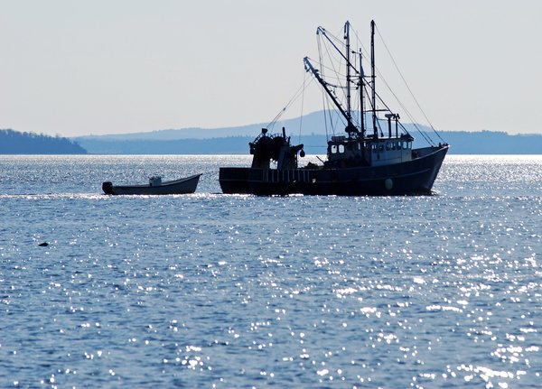 Trawler: Trawler