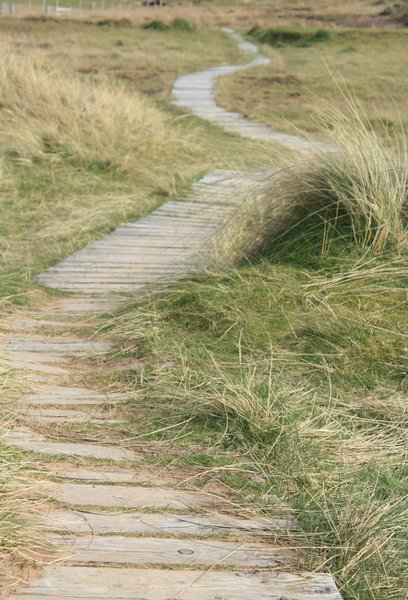 Path through the dunes: Path through the dunes