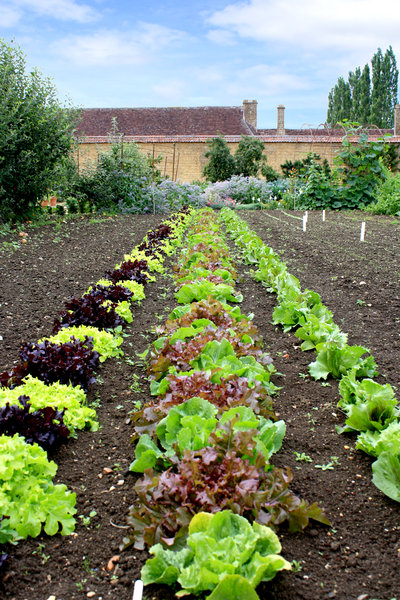 Kitchen Garden: Kitchen Garden