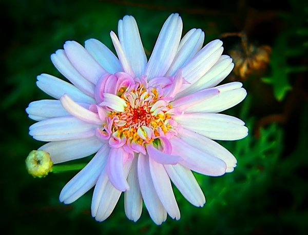 Flower 1: Pretty pink, white and yellow daisy style flower. I don't know the botanical name.