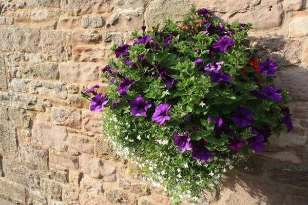 Hanging Basket Flowers In A