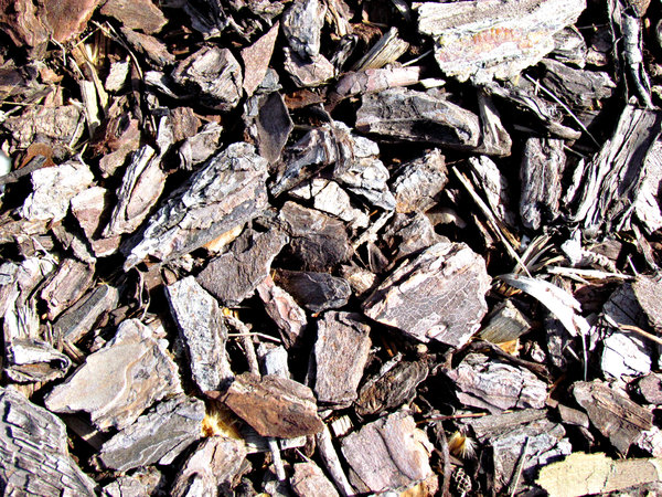 chip of the old block: ground covered with wood chips