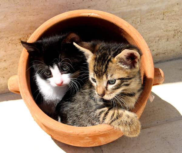 Kittens in a pot 1: My kittens hiding in a clay pot. Although playful, always ready for hunt!