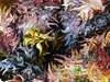 Seaweed abstract 1
