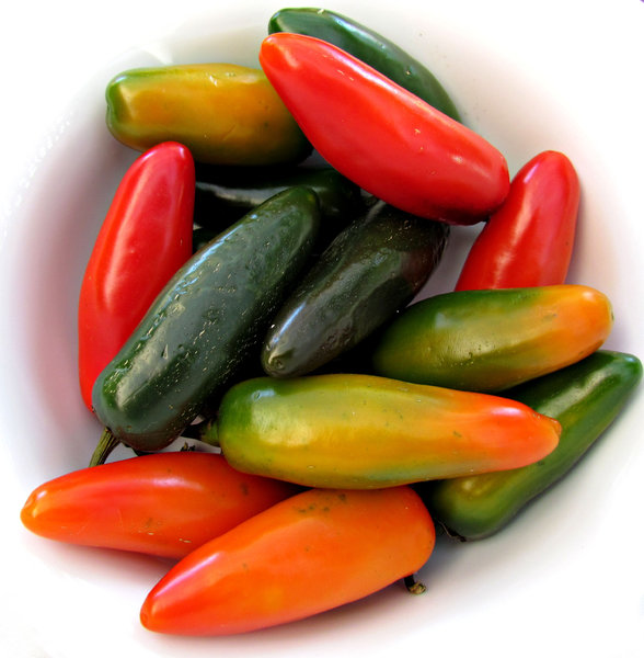 cool chilli colors: a number of short colorful chillies