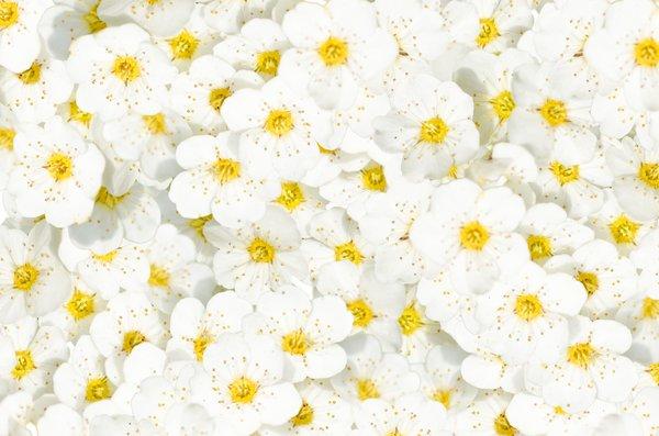 Free stock photos rgbstock free stock images tiny flower tiny flower background mightylinksfo