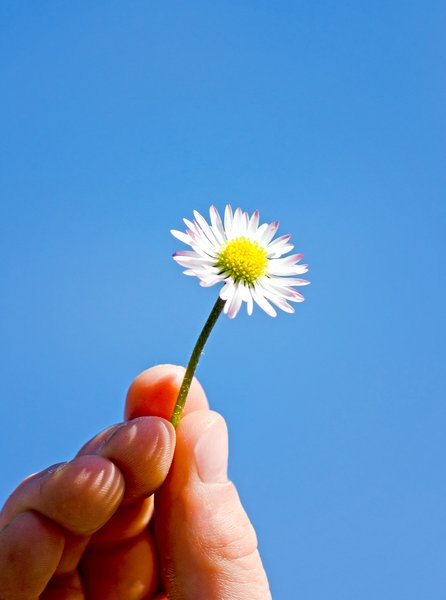 Daisy in the sky: Hand holding up a single daisy