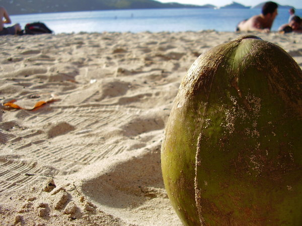 Coconut close Up: Coconut close up over the beach with the beach in the background