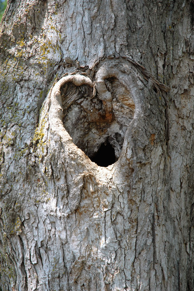 Heart: A heart shape on a tree.