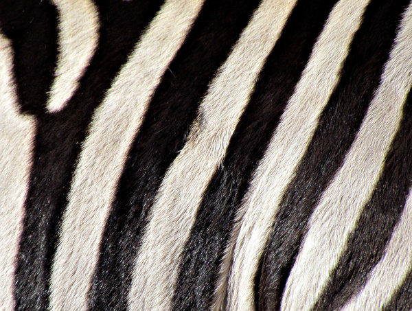 black & white stripes1: black and white zebra strip patterns