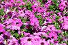 garden colour1