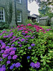 Hydrangea garden