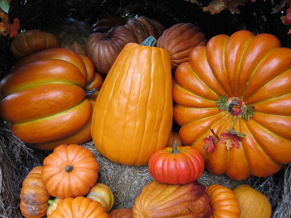 Pumpkins: Fall pumpkins.