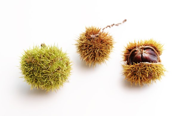 chestnuts: chestnuts