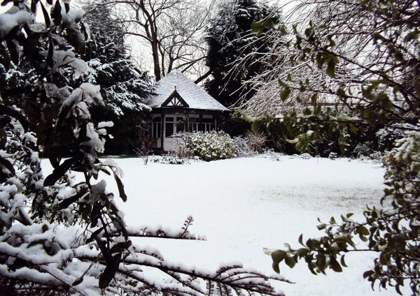 Snow: A Winter WonderLand: The first snow of 2011 transformed my back garden