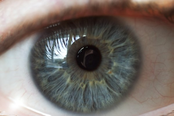 Human Eye: Close up of human eye