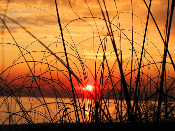 Grassy Sunset: Seen through beach grasses