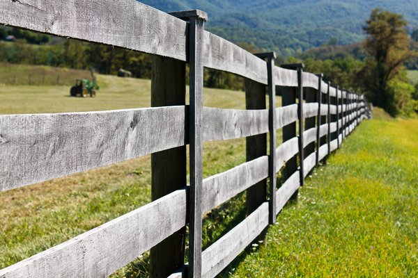 The Fence Line: Fence line at the farm.