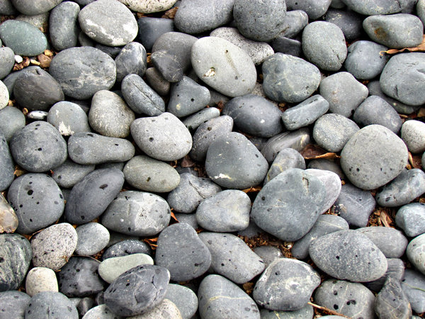 rain drops on pebbles: rain drops beginning to fall on garden pebbles