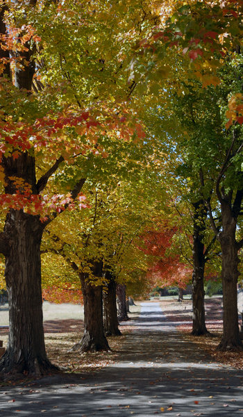 Fall Foliage: A walk through fall foliage.