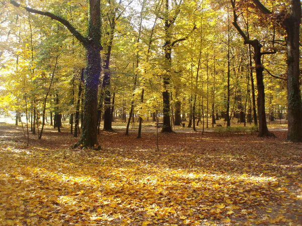 autumn: I took this picture in Grad mladih, park in the suburb of Zagreb, Croatia.