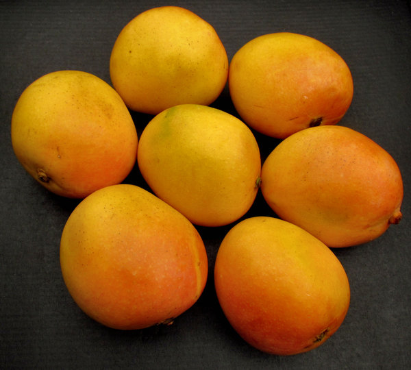 mango colour1: colourful golden ripe fresh mangoes