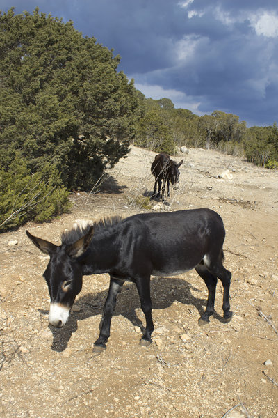 Wild donkeys: Wild donkeys in northeast Cyprus.
