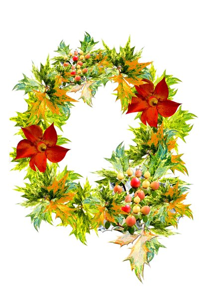Christmas Wreath Gold: A selection of holly and ivy leaves from my garden put together to create a Christmas wreath.