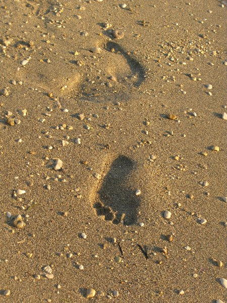 footprints in the sand: none